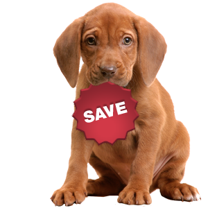 SAVE_puppy.png